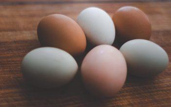 ว่าด้วยเรื่องของไข่ ตอนที่ 2