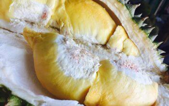 Specialty durian ทางออกของทุเรียนไทย